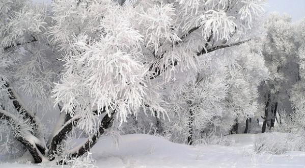 Загрузка обои снег, зима, ветки, зимний день, snow, winter, branches