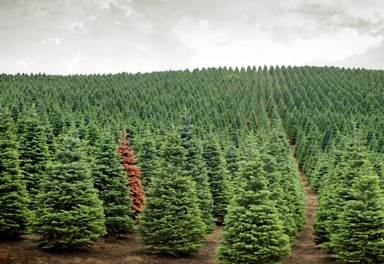 Методы выращивания леса 93