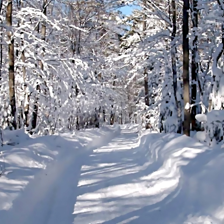 Пропавшая Наталья Меламед замерзла вКрасногорском лесу