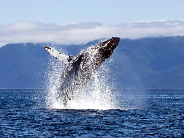 Экологи назвали число пострадавших отчеловека видов животных