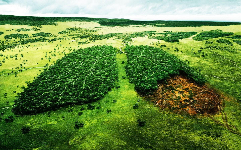 Площадь вырубки лесов сельской территории разрушительно влияет наэкосистему— Экологи США