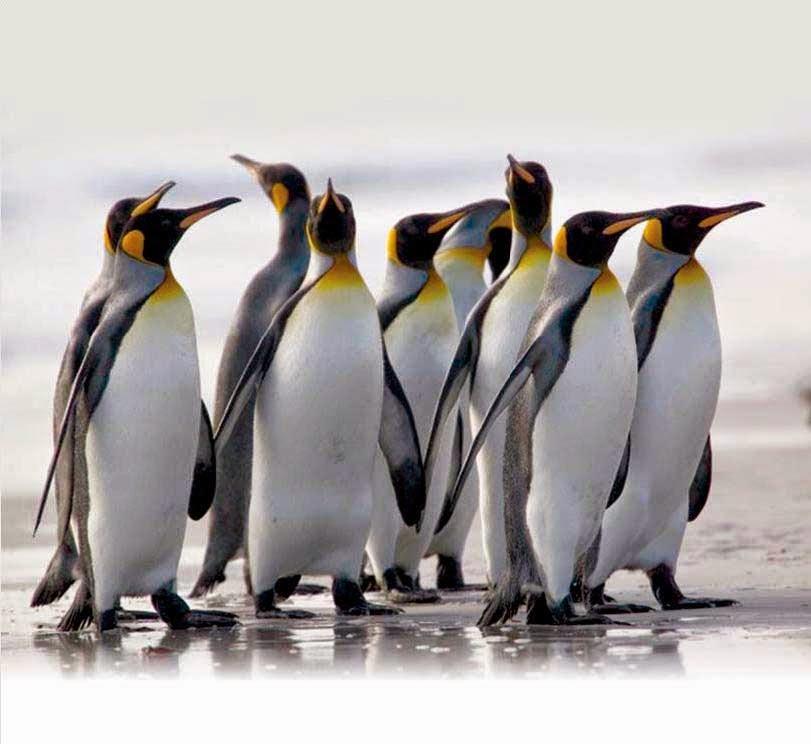 Ученые: Найденный в новейшей Зеландии огромный пингвин был ровесником динозавров