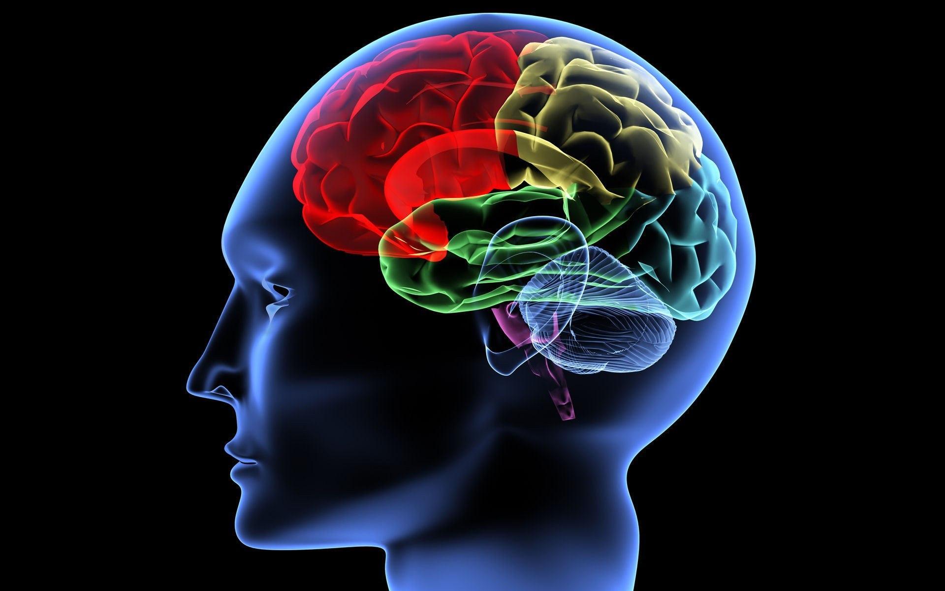 Творческие способности человека зависят отсвязей между полушариями— Ученые
