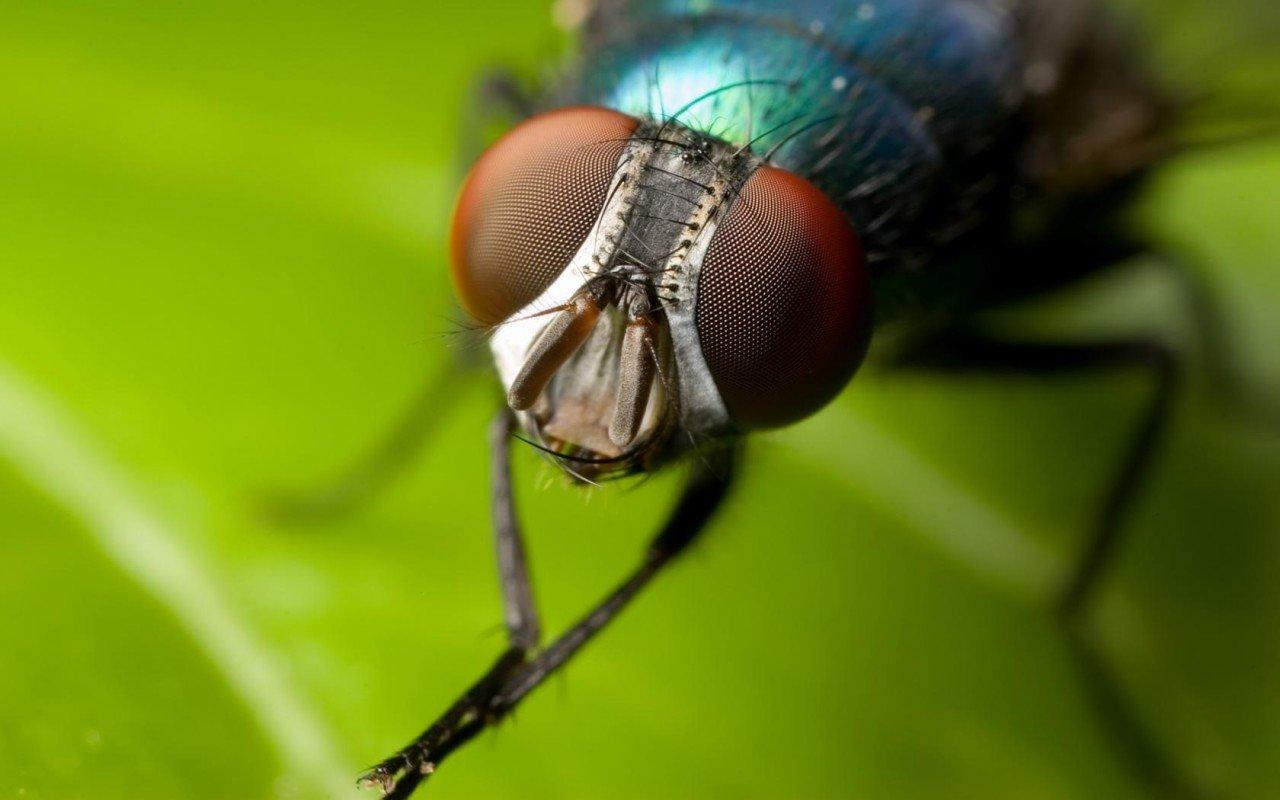 Ученые отыскали изменения вгенах выращенных вкосмосе мух-дрозофил