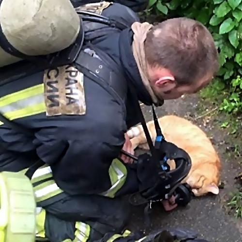 Наулице Маршала Тухачевского произошёл пожар— работники МЧС спасли кота