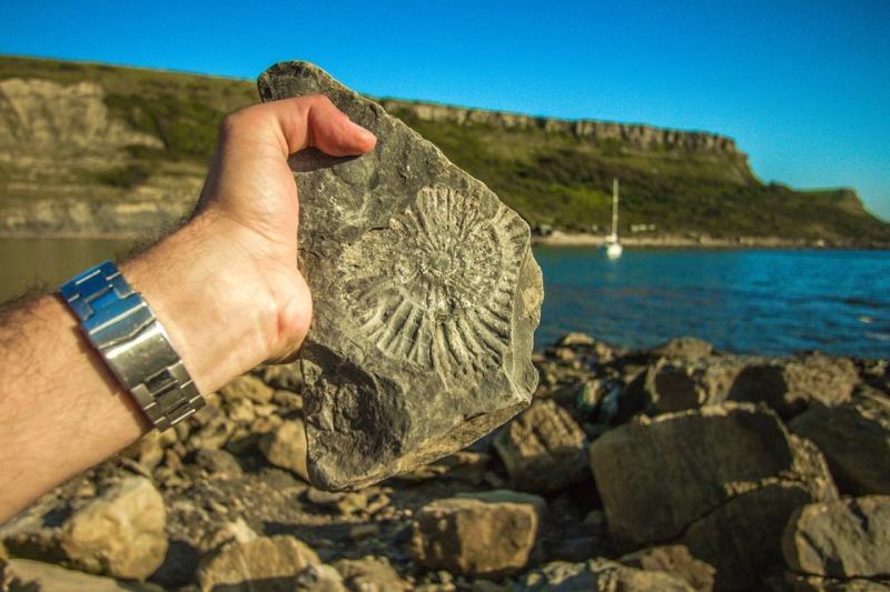 Ученые отыскали останки самых старинных растений