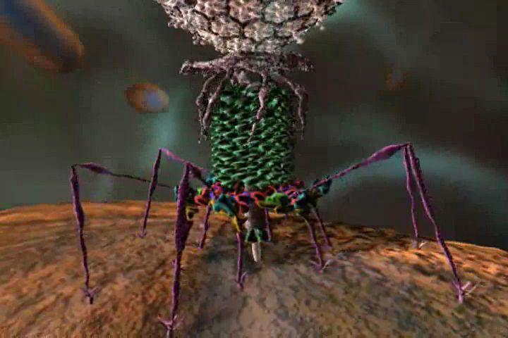 Ученые обнаружили вирусы, которые всостоянии заменить антибиотики
