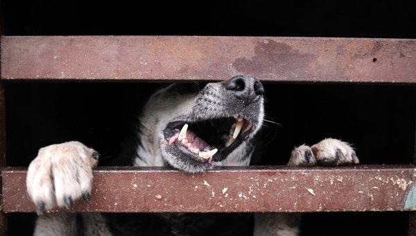 После нападения бешеной собаки наюго-востоке столицы  введен карантин