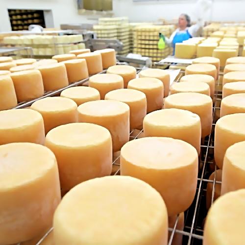Подмосковье планирует занять второе место в РФ попроизводству сыров