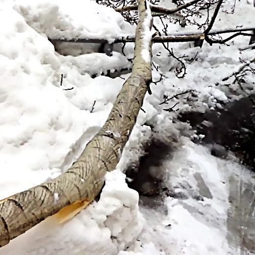 ВКазани наженщину рухнуло обледеневшее дерево