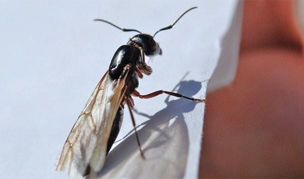 Внедалеком прошлом открытый вид муравьев назвали вчесть группы Radiohead