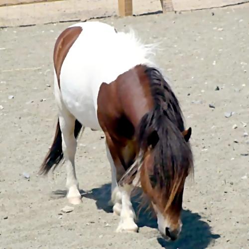 Навидео попало как пони бросилась под колеса вцентре Красноярска