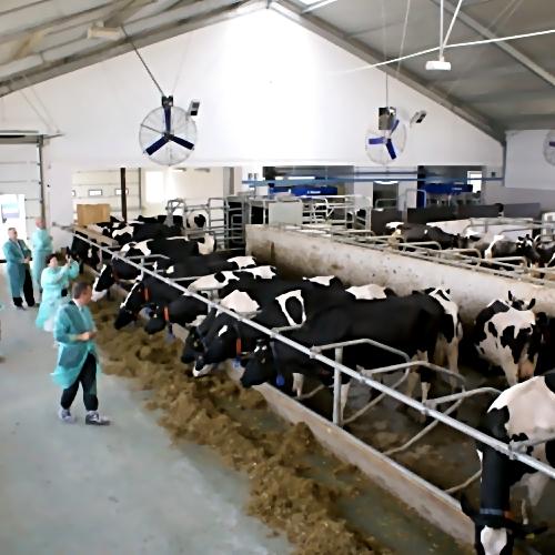 Инвесторы изДании планируют расширить молочную ферму вНестеровском районе