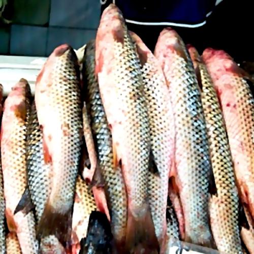 ВНаходке произошёл массовый выброс рыбы наберег