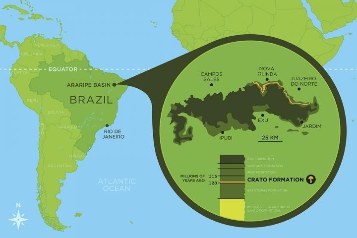 Ученые нашли в Бразилии древнейший гриб заключенный в минерал