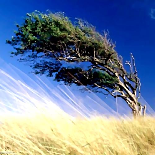 ВНижнем Тагиле наподростка упала ветка тополя