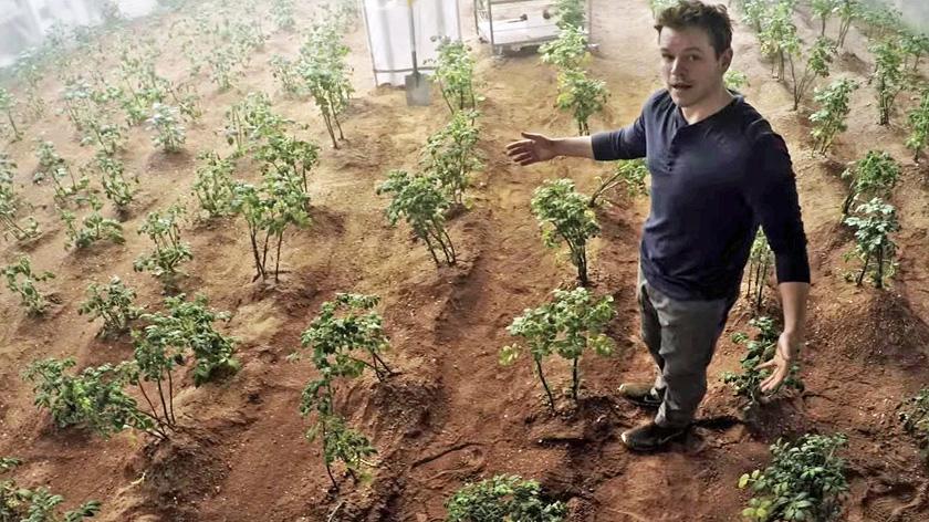 НаМарсе можно выращивать безопасные для человека овощи излаки