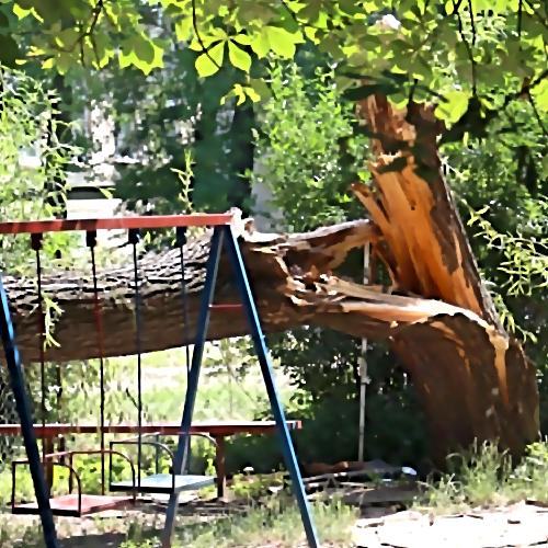 ВОмске наребенка упало дерево