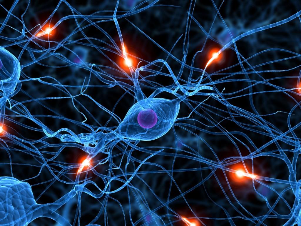 Ученые: Увзрослых людей новые нейроны вмозге непоявляются