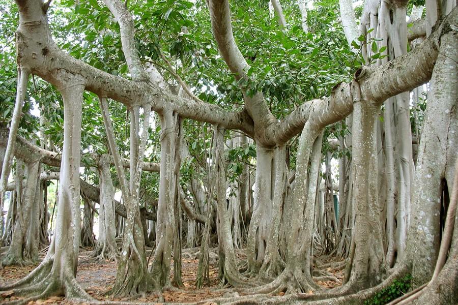 Ученые: Первые наземные растения росли корнем вверх