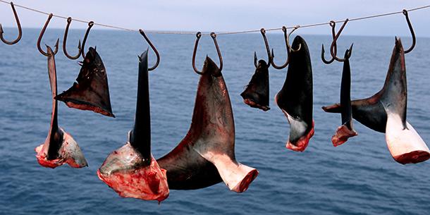 Ученые: Повине человека могут пропасть 8 600 видов животных