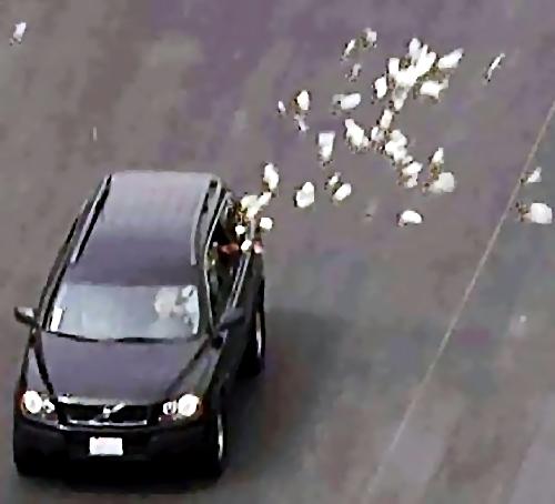 2,5 млн руб. вылетело изокна машины вКраснодаре