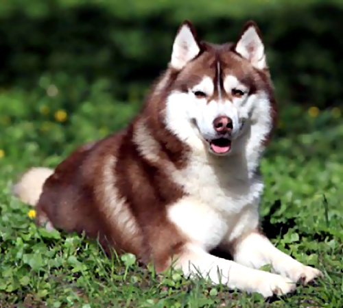 Молотком забил досмерти собаку нетрезвый садист изНовосибирска