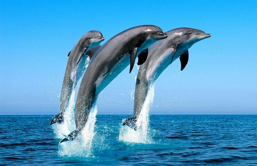 Ученые представили какимбы был мир, еслибы животные стали разумными