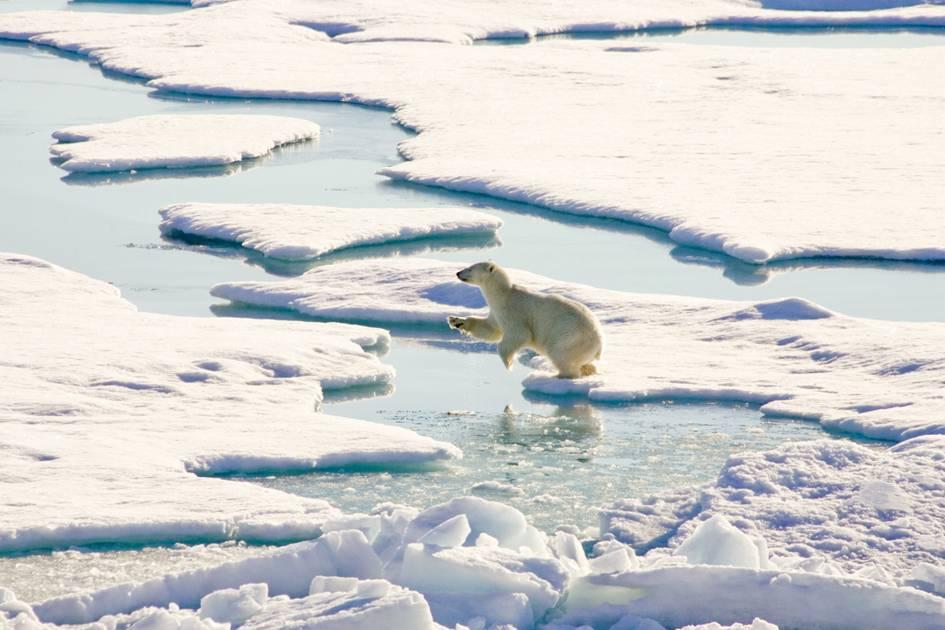 Мировые специалисты вобласти исследования Арктики проводят съезд вПетербурге