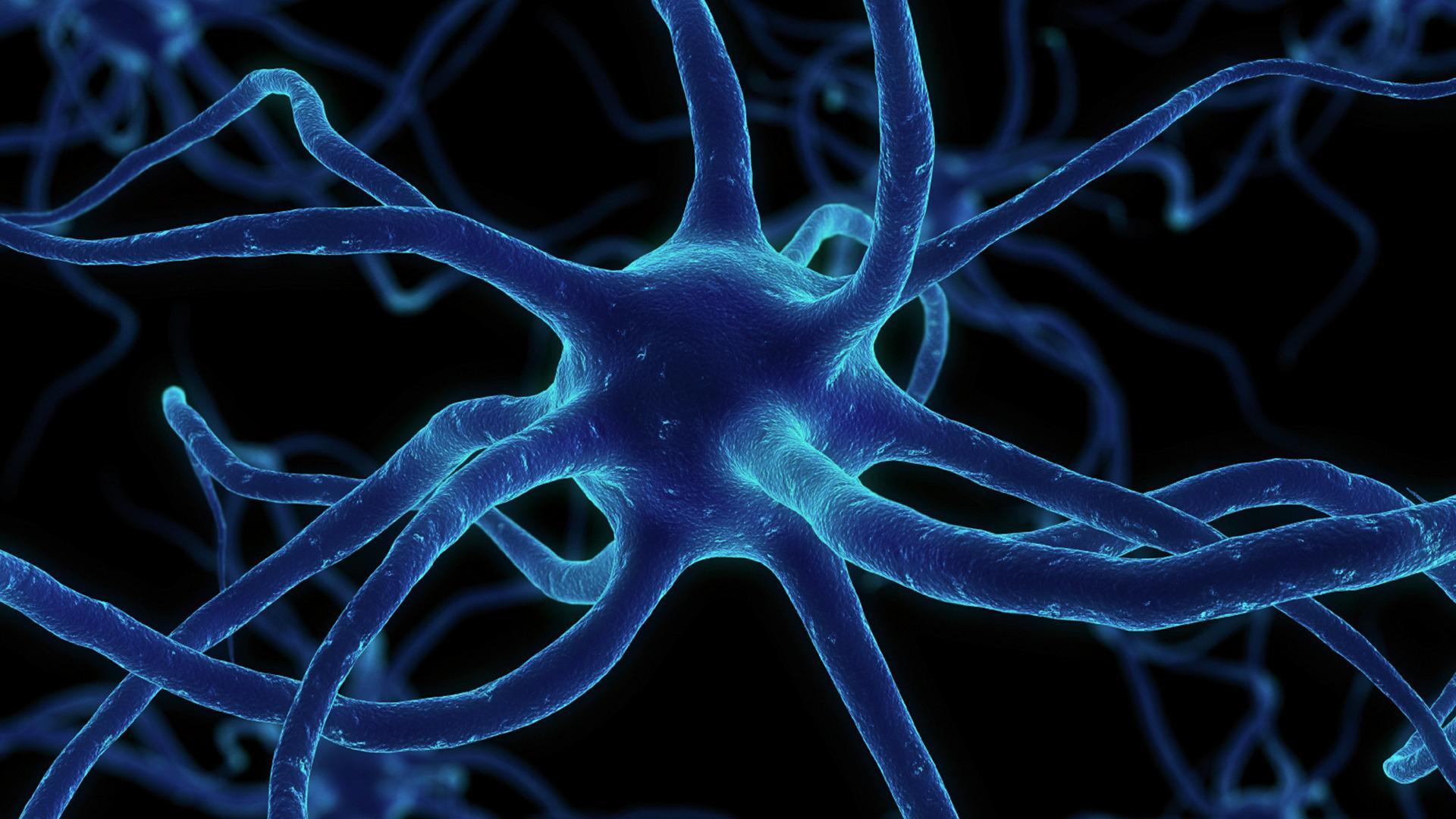 Ученые утверждают, что нервные клетки все-таки могут восстанавливаться