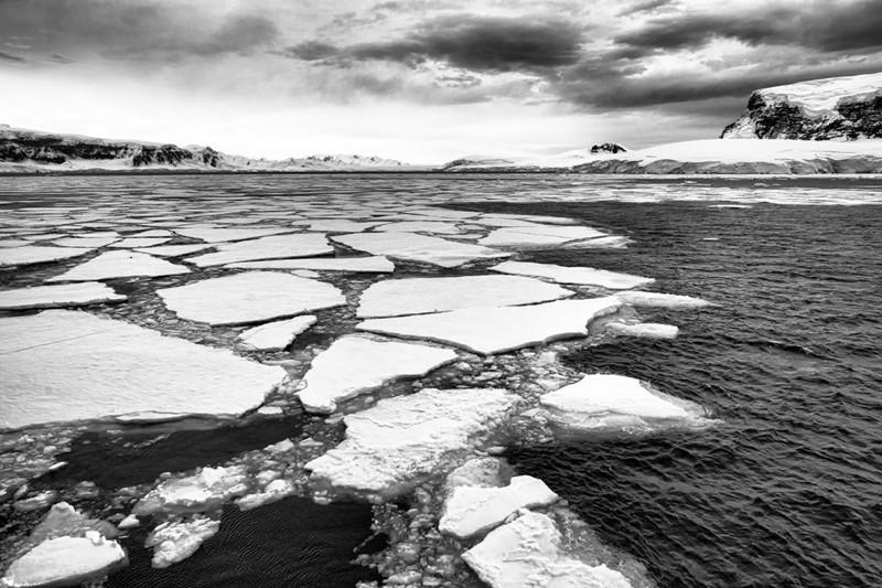 Таяние льдов привело к возникновению водорослей вАнтарктиде