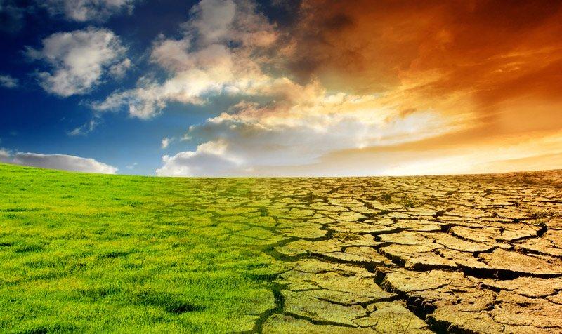 Изменения климата вынуждают растения «мигрировать»— Ученые