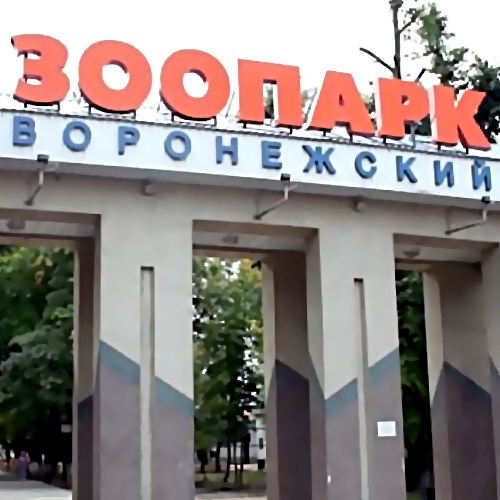 Воронежский зоопарк попросил помощи городских жителей вблагоустройстве территории
