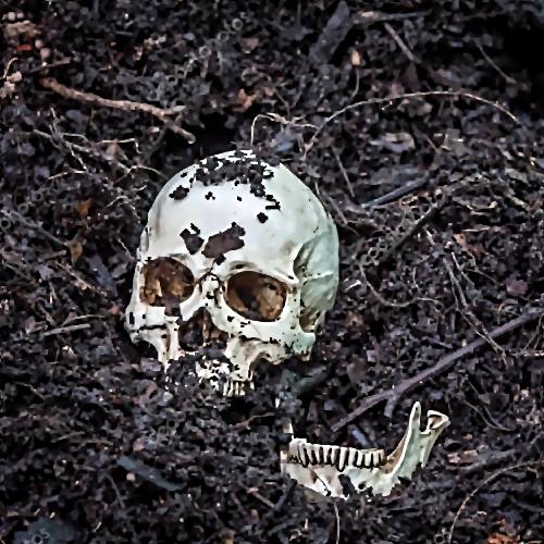 Череп откопали надачном участке под Всеволожском