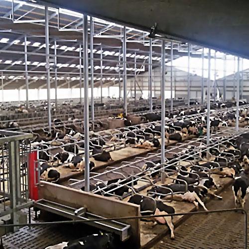 ВЯрославской области построят новейшую молочную ферму
