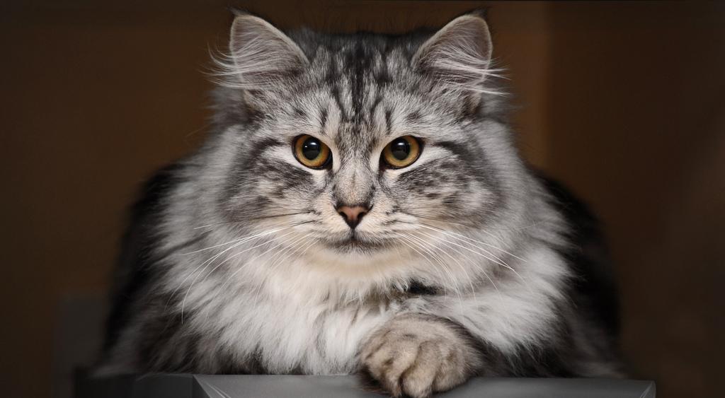 Кошки всостоянии лечить людей— Ученые
