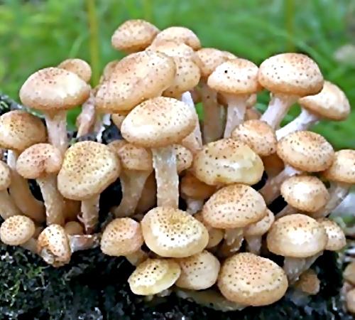 ВРостове ототравления грибами скончался 5-летний сын