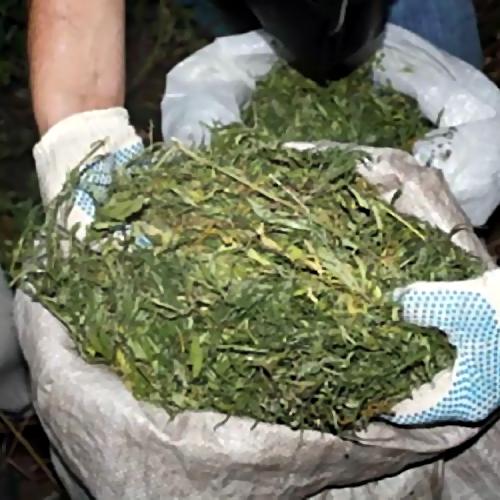 Милиция изъяла ужителя Ставрополья неменее 700 граммов марихуаны