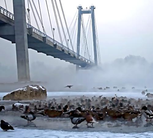 ВДивногорске мужчина спрыгнул смоста напротив Красноярской ГЭС