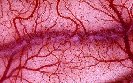 Ученые впервый раз вырастили кровеносные сосуды влаборатории
