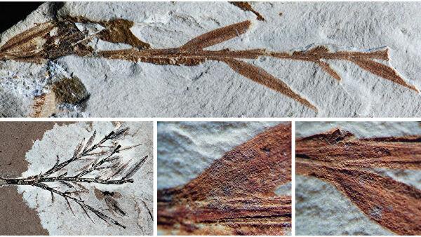 """Картинки по запросу """"В Бразилии нашли окаменевшие растения старше динозавров"""""""