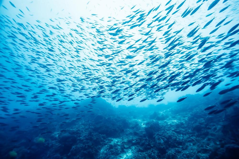Картинки мирового океана для презентации